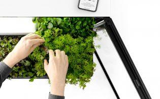 Miele Plantcube: volautomatische kweekkas in de keuken